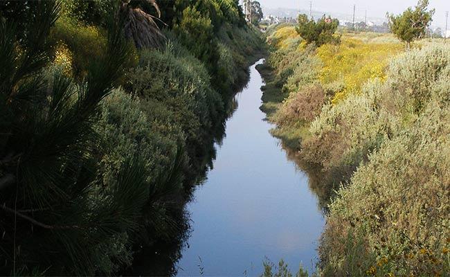 Ballona Wetlands Restoration Project
