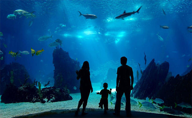 Grant Writing for Ocean Literacy Programs